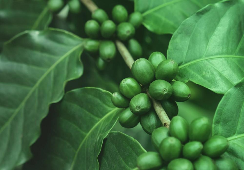 Green Parallax